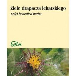 ZIELE DRAPACZA LEKARSKIEGO